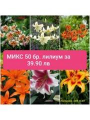 МИКС Лилиум 50бр.