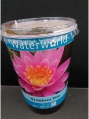 Водна лилия-розова-Nymphea Pink