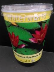 Водна лилия-червена-Nymphaea Pygmaea Red