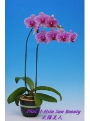 Орхидея Фаленопсис (Phal. I-Hsin Sun Beauty)