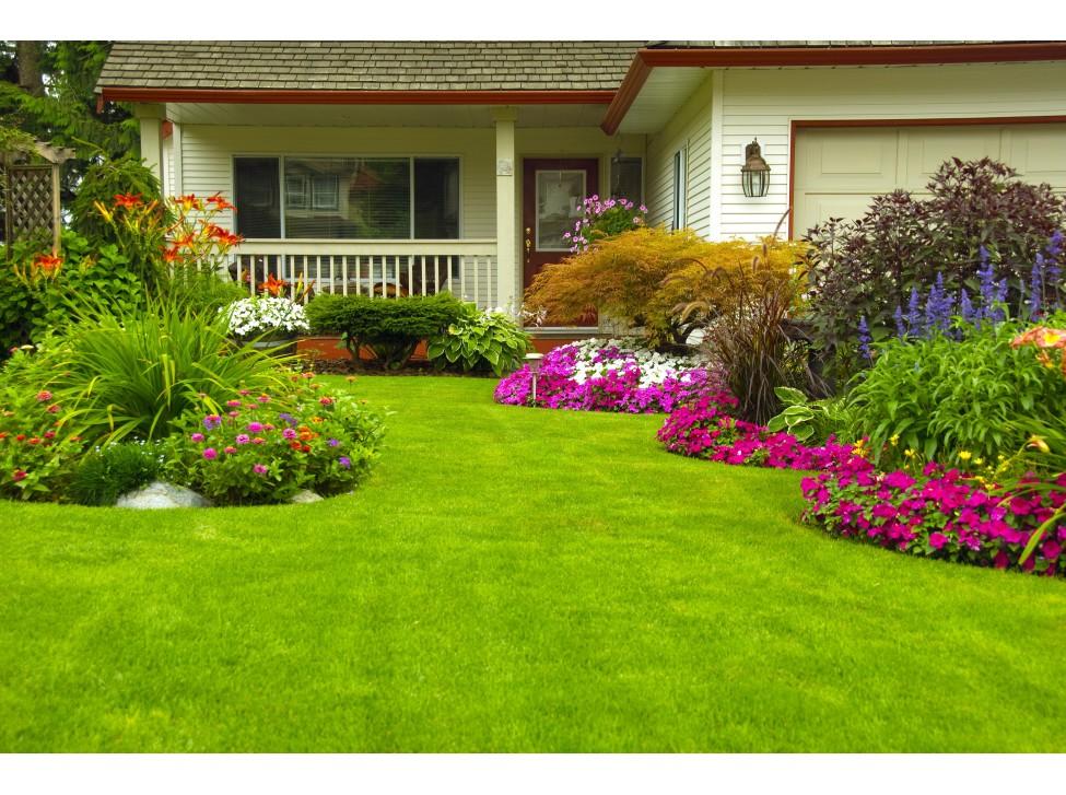 10 растения, които обезателно трябва да присъстват в нашата градина