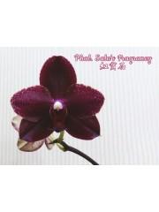 Орхидея Фаленопсис (Phal. Salu's Fragrancy)