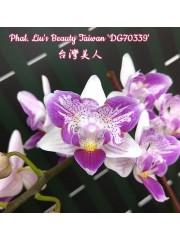 Орхидея Фаленопсис (Phal. Liu's Beauty Taiwan)