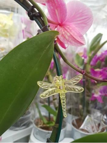 Клипсове за Орхидеи - жълти