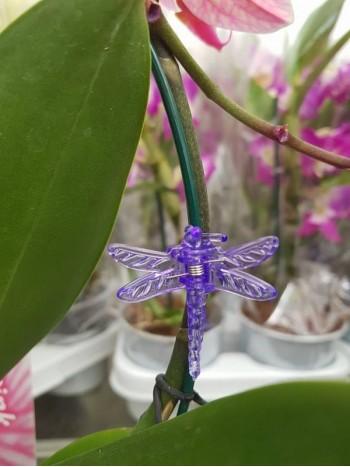 Клипсове за Орхидеи - лилави