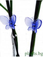 Клипсове за Орхидеи - сини