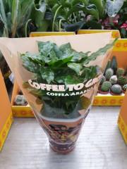 Кафе PR4802