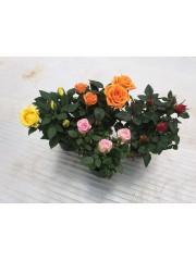 Мини роза - комплект 4бр