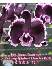 Орхидея Фаленопсис (Phal. Summer Breath '401')