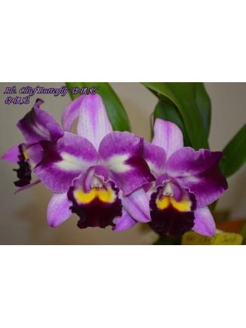 Орхидея Катлея (Rlc. Chief Butterfly)