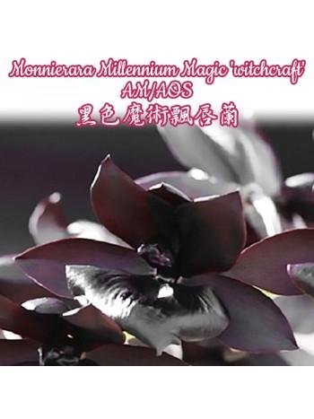 Орхидея Мониерара (Monnierara Millennium Magic 'witchcraft' AM/AOS)