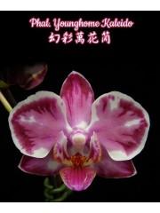 Орхидея Фаленопсис (Phal. Younghome Kaleido)