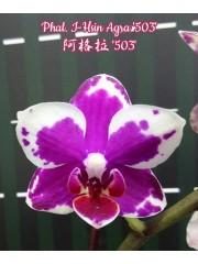 Орхидея Фаленопсис (Phal. I-Hsin Agra '503')