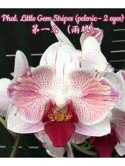 Орхидея Фаленопсис (Phal. Little Gem Stripes (peloric - 2 eyes))