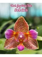 Орхидея Фаленопсис (Phal. Joy Fairy Tale)