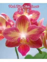 Орхидея Фаленопсис (Phal. Tying Shin Smart)