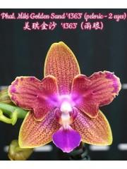 Орхидея Фаленопсис (Phal. Miki Golden Sand '1363' (peloric - 2 eyes))