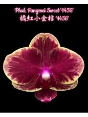 Орхидея Фаленопсис (Phal. Fangmei Sweet '1456')