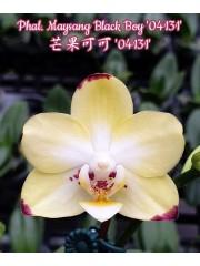 Орхидея Фаленопсис (Phal. Maysang Black Boy '04131')