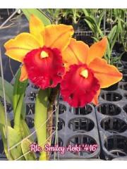 Орхидея (Rlc. Smiley Aoki '416')