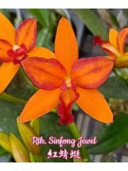 Орхидея (Rth. Sinfong Jewel)