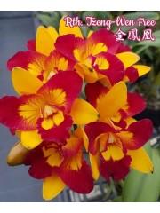 Орхидея (Rth. Tzeng-Wen Free)
