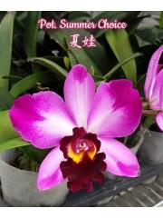 Орхидея (Pot. Summer Choice)