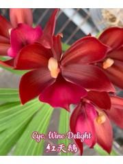 Орхидея (Cyc. Wine Delight)