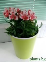 Кашпа за цветя - Лимон - S395