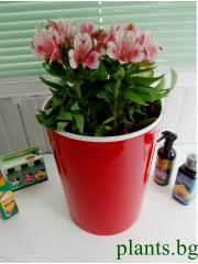 Кашпа за цветя - Червена - S394