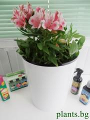 Кашпа за цветя - Бяла - S396