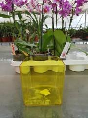 Кашпа  за орхидеи - Жълта - S321