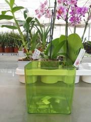 Кашпа  за орхидеи - Зелена - S340